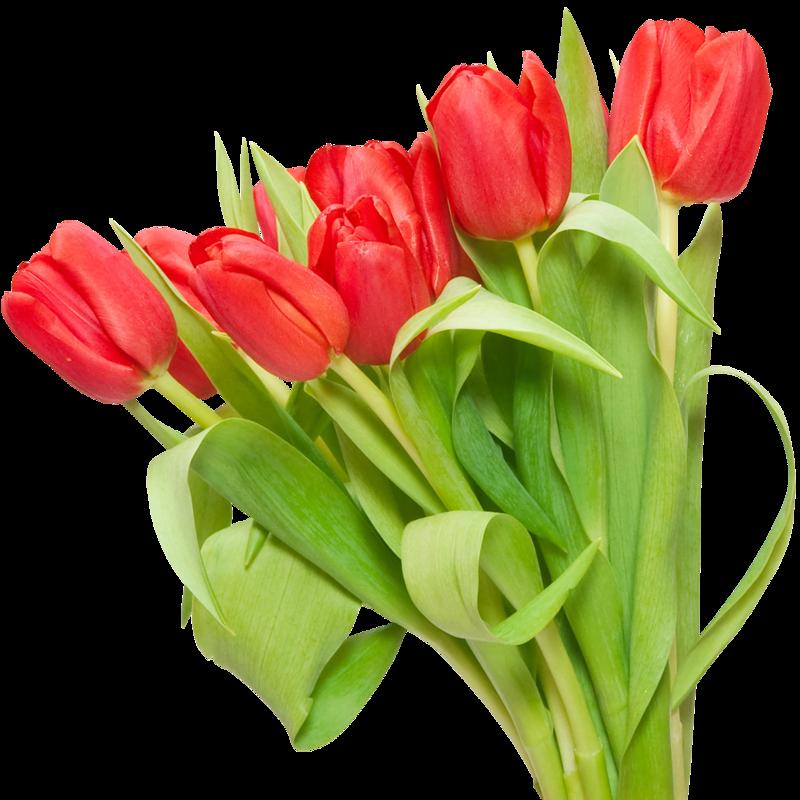 Букет из 11 красных тюльпанов